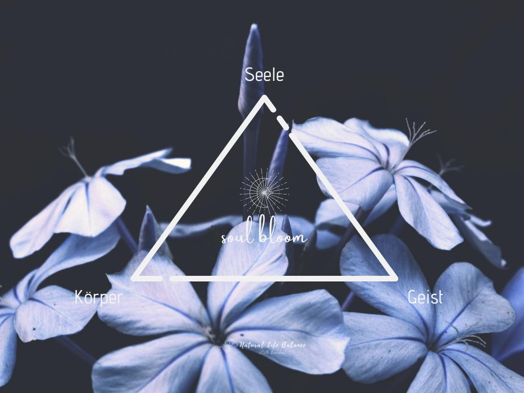 soul bloom - 1:1 Mentoring